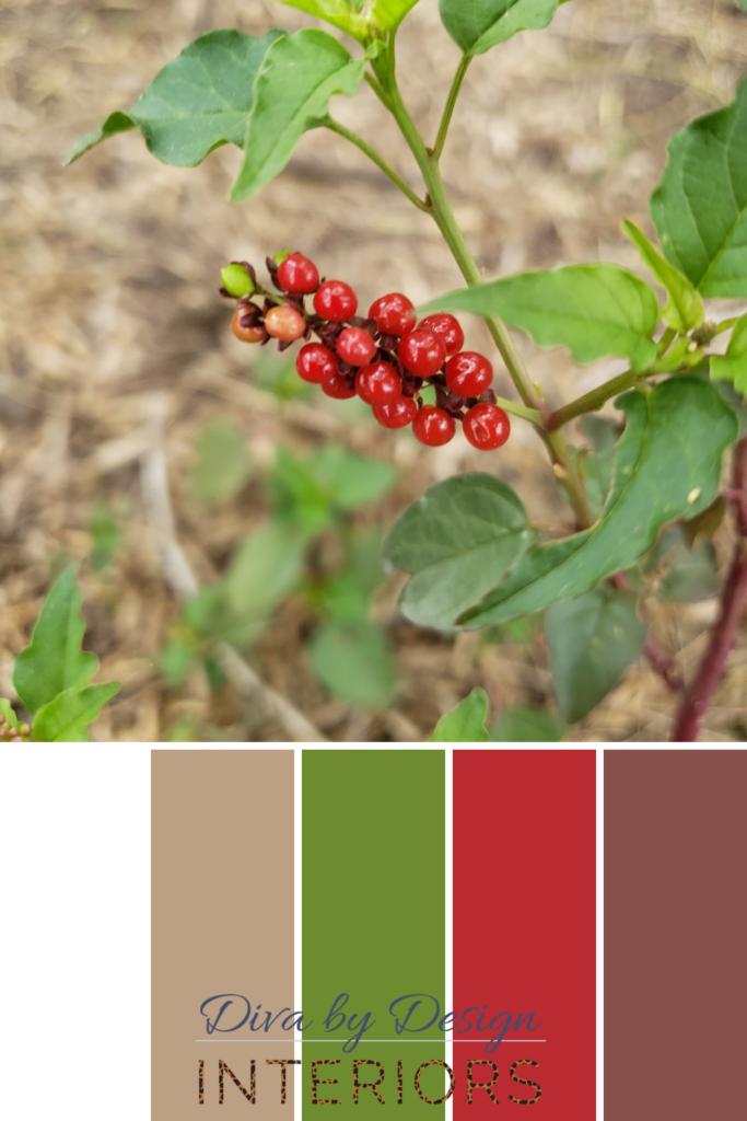 how to choose paint colors form nature diva by design mcallen interior designer 78501 78502 78503 78504 78505 78539 78557 78572 88540