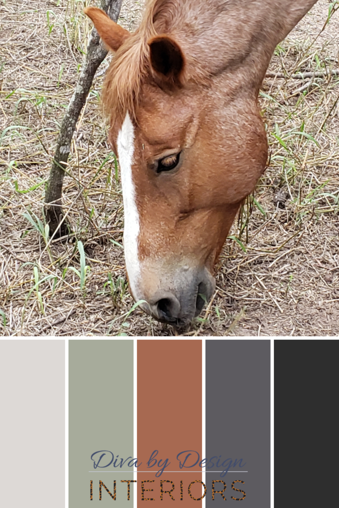 how to choose paint colors from pets diva by design weslaco interior designer 78596 78599 78579 78570